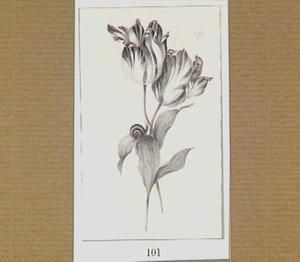 Twee verstrengelde tulpen en een slak