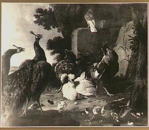 Twee pauwen, haan, kippen, een duif en eenden in een tuin