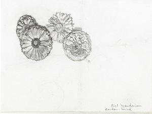 Study of four marigolds