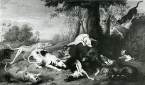 Honden vallen een wild zwijn aan