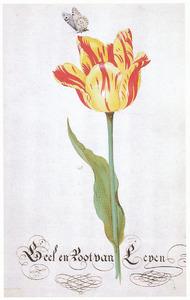 Tulp (Geel en Root van Leyen)