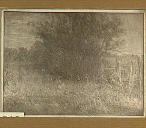 Bomen in een weide