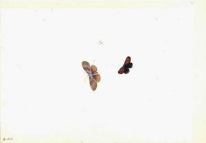 Twee vlinder en een vliegende mier