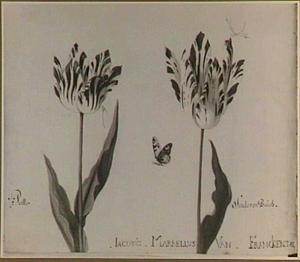Twee tulpen (Perlla en Linda van Búrch) met een waterjuffer en een vlinder