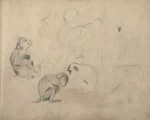 Schetsboekblad met schetsen van diverse apen