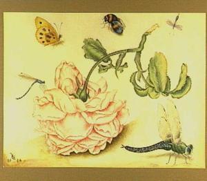 Roos en insecten