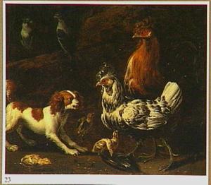 Een blaffende spaniel temidden van kippen en duiven