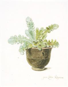 Plant in een pot