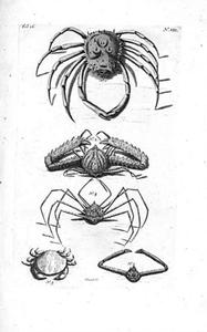 Vijf krabben