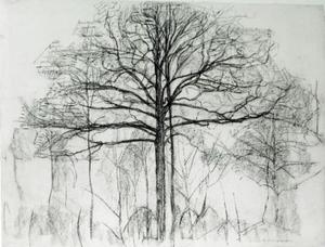 Study of trees 1
