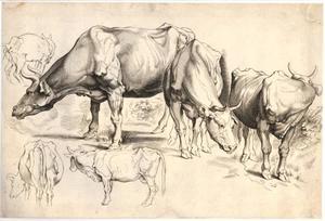 Studie van koeien