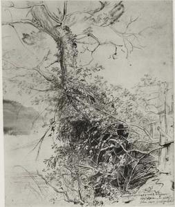 Studie van een boomstam met struiken