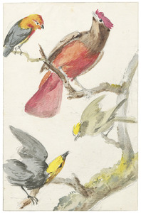 Surinaamse vogels