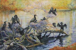 Aalscholver op het nest II