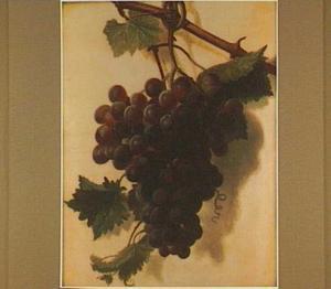 Tros paarse druiven