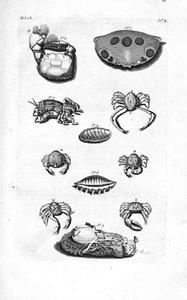 Zeehaas, popchiton en krabben