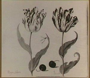 Twee tulpen (Morgenstern en Aúgúste) en twee morellen