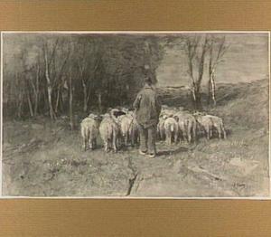 Schaapsherder met schapen
