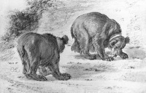 Studies van een beer