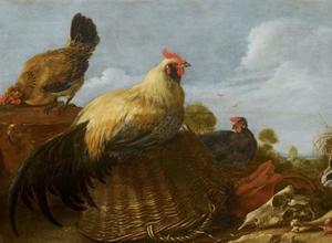 Haan en kippen