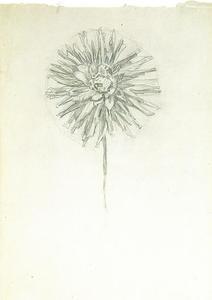 Study of a dahlia (sketchbook sheet 4)