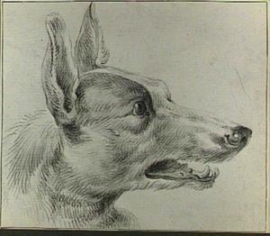 Kop van een hond