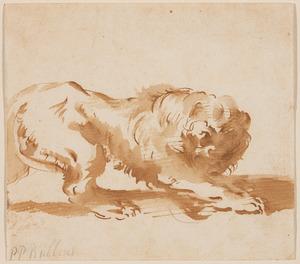 Studie van een leeuw, naar rechts