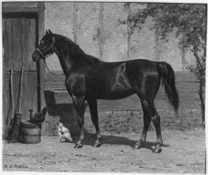 Paard bij de stal
