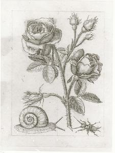 Bataafse roos, krekel en wijgaardslak