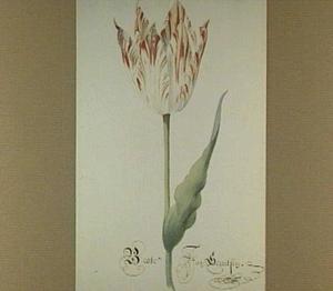 Tulp (Beste Jan Gerritsen)