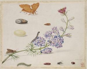 Valse ridderspoor met metamorfose van de ridderspooruil en andere insecten