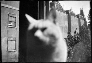 Kat voor het venster