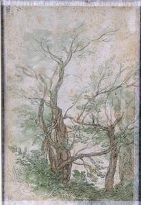 Bomen in een landschap