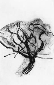 Sketch of apple tree