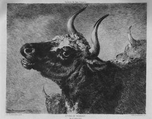 De stier
