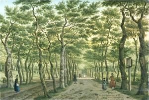 Het Herenpad in het Haagse Bos