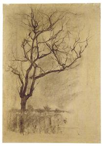 Schets van een boom voor de St. Jacobskerk