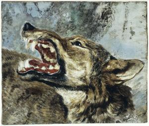 Studiekop van een dreigende wolf