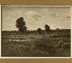 Landschap met berkenbomen bij winderig weer