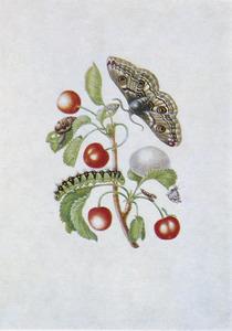 Zoete kers met metamorfose van de nachtpauwoog en andere insecten