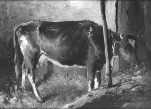 Koe in stal