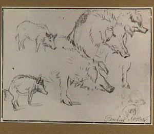 Studies van langharige varkens