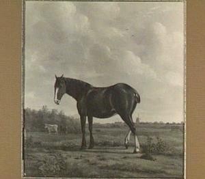 Een paard in een polderlandschap