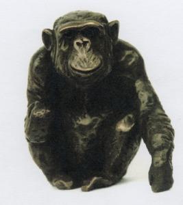 Chimpansee 'Charlie'