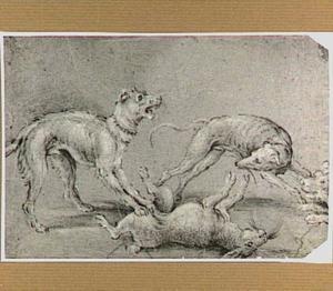 Drie  jachthonden bij een dode haas