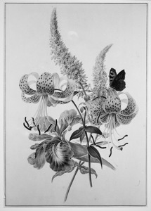'Een Seis, twee gevlekte lelies, delpinium en een dagpauwoogvlinder'