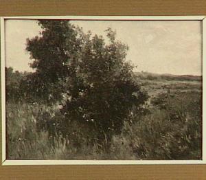Landschap met struiken