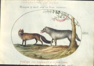 Vos en wolf onder een olijfboom