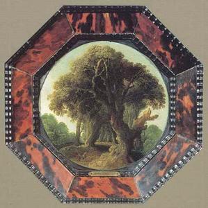 Boslandschap met hoge bomen
