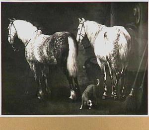 Interieur van een stal met twee appelschimmels